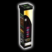 Blackboxx Candela Romana Grande 3